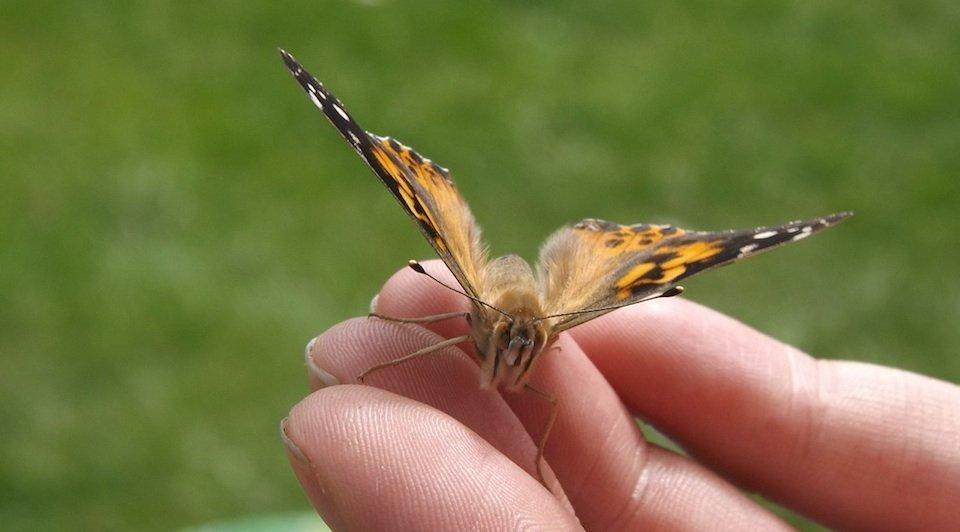Nuove aperture: il giardino delle farfalle