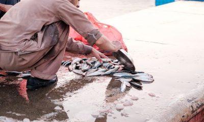 Al mercato del pesce di Deira
