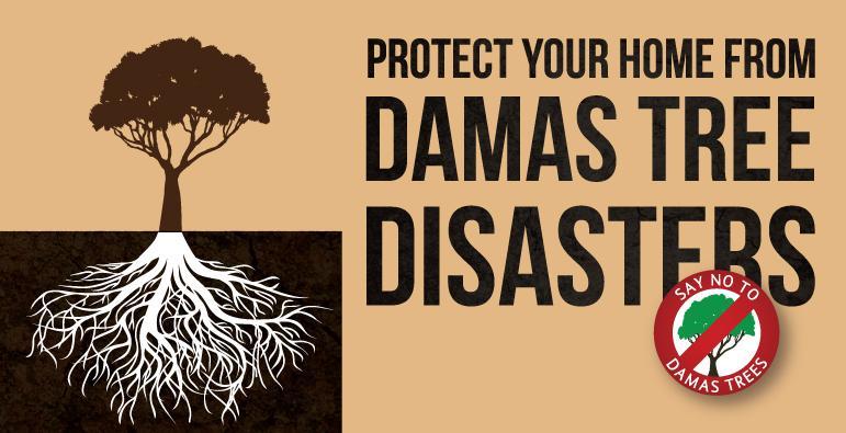 Il paradosso triste del Damas Tree