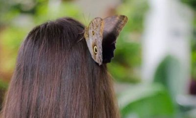 Idee per il weekend: una visita al Dubai Butterfly Garden