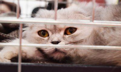 Animali & Co: veterinario e vaccini