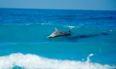 Siete mai stati in queste spiagge?